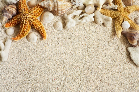 starfish and seashell on tropical beach