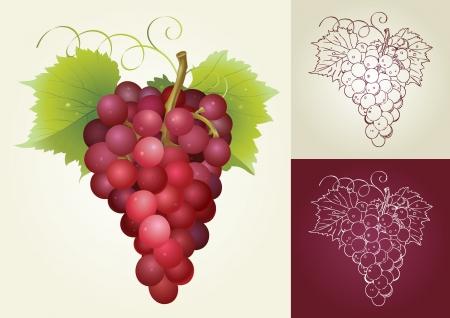 Grape Stock Vector - 18259212