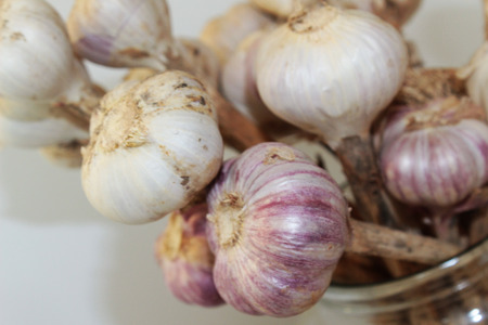 organic dried garlic Stock Photo