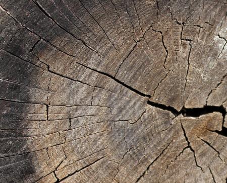 wood cut: Wood cut texture tree trunk