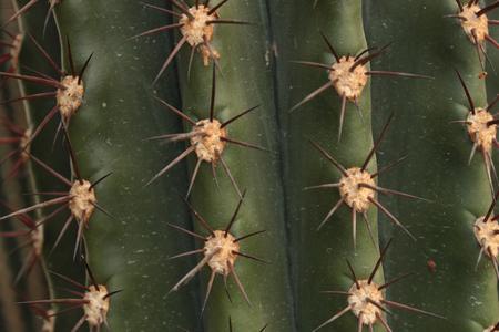 acuminate: Cactus Texture