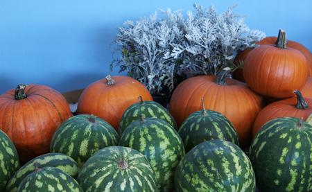mini farm: autumn pumpkin Stock Photo