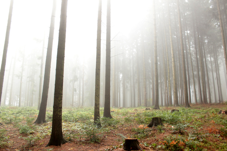 autumnally: Autumn forest in the fog Stock Photo