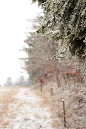 the edge: Winter landscape forest edge