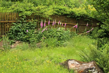 야생 꽃과 함께 오래된 자란 정원