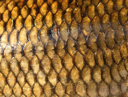 Fresh carp fish scales texture Stock Photo