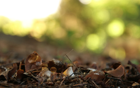 cep mushroom: Cep mushroom growing in autumn forest Stock Photo