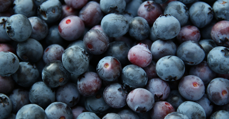 l agriculture: background of blue blueberries
