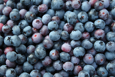 background of blue blueberries