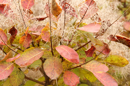 red colors of autumn