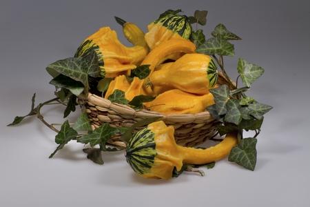 Strange yellow squashes autumn decoration