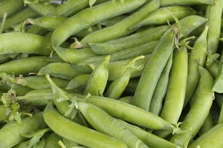 Fresh picked pea pods