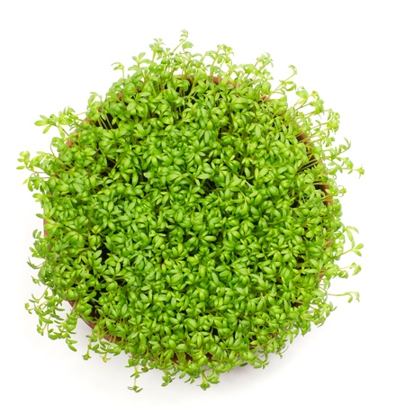 Fresh green watercress in rounded pot, isolated on white