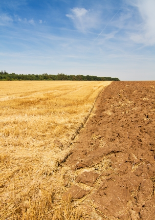 Rural scenery - stubble and plowed field under blue sky, vertical photo