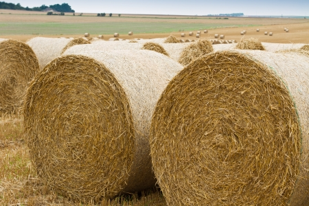 Bales of straw in a row on stubble field, rural landscape