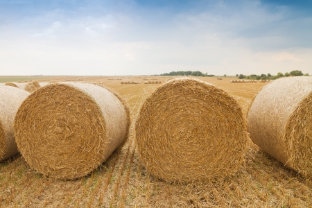 stubble field: Bales of straw in a row on stubble field Stock Photo