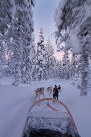 Husky sledge ride at sunset in winter wonderland (Lapland) photo