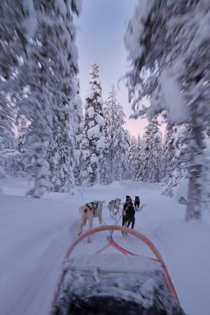 Husky sledge ride at sunset in winter wonderland (Lapland) photo