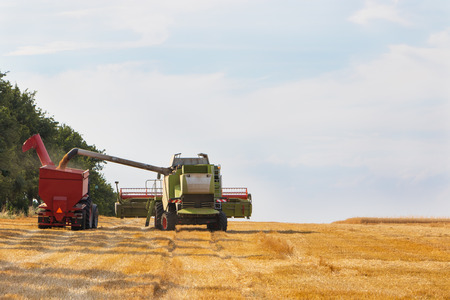 combines: Combines harvester filling trailer with wheat in sunny dal, rural scene