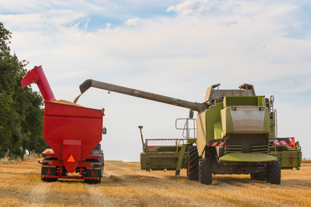 tillage: Combines harvester filling trailer with wheat grains on a sunny day, rural scene Stock Photo