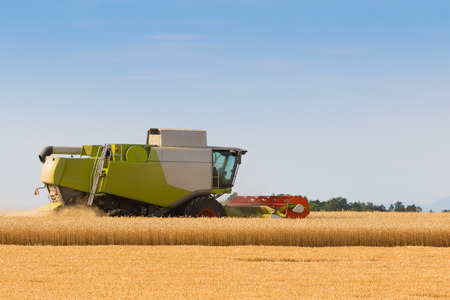 crop harvest: Combines harvester cutting wheat grains on a sunny day, rural scene