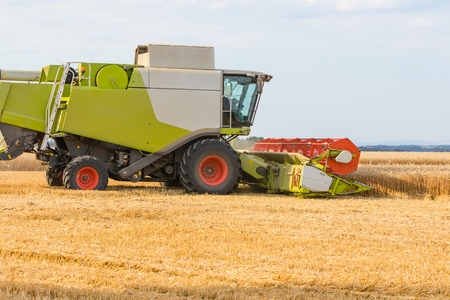 combines: Combines harvester cutting wheat grains on a sunny day, rural scene