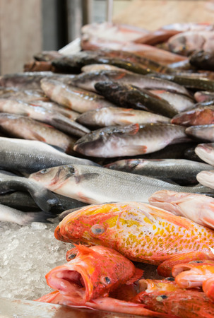 fish market: Fresh fish for sale in a fish market, selective focus on red mullet fish Stock Photo