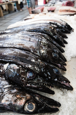 scheide: Schwarzer Degenfisch espada auf Portugiesisch auf dem Fischmarkt von Funchal, Madeira. Fisch aus dem Atlantik, selektiven Fokus auf den zweiten Fisch