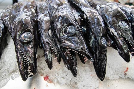 scheide: Schwarzer Degenfisch espada auf Portugiesisch auf dem Fischmarkt von Funchal, Madeira. Fisch aus dem Atlantik
