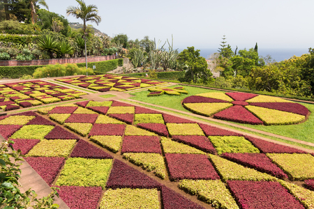 botanical garden: Funchal, Madeira island, Portugal - July 7, 2015: Botanical garden of Funchal. One of the famous gardens in Madeira island, with 2500 exotic plants from all continents