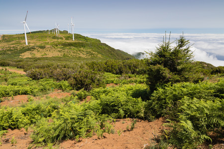 Spectacular view in Paul da Serra plateau in Madeira island, Portugal. Low vegetation, wind turbines and clouds below in a valley. Stock Photo
