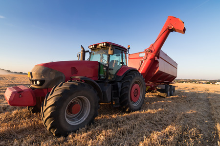 stubble field: Agriculture tractor and tow trailer waiting to be filled at grain campaign at sunset on a stubble field