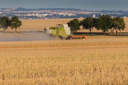 cosechadora: Cosechadoras recoger los granos de trigo en la puesta del sol en un d�a caluroso y soleado. escena rural con una ciudad en el fondo. enfoque selectivo en una cosechadora.