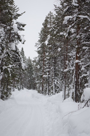 Invierno hermosa virgen paisaje nevado
