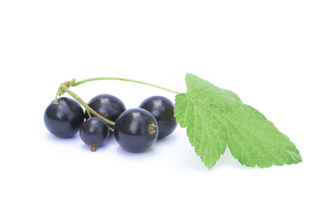 Black currant berries isolated on white background