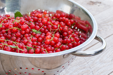 Fresh picked red currant berries in a metal colander on wooden table Stock Photo