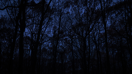 Black leafless trees silhouettes over dark blue sky. Gloomy and dark  monochrome background