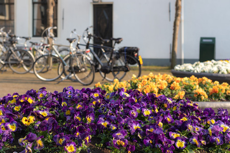 Flower pots with blooming pansies and parked bicycles in background.