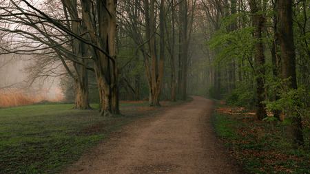 Early morning in Amsterdamse Bos - view of an Amsterdam forest in springtime. Calm and tranquil scene in Dutch countryside