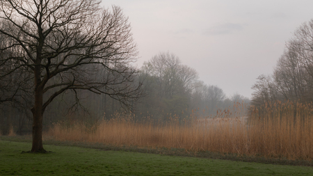Early morning in Amsterdamse Bos - view of an Amsterdam forest in springtime. Calm and tranquil scene.