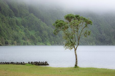 Deep forest with a lone tree in the foreground, mist and fog above lake Lagoa Azul in Sao Miguel island, Azores. An enchanting and tranquil scene of wild untouched Azorean nature