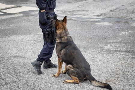 Unidentified female police officer training a german shepher dog. Dog is sitting and patiently waiting for orders Archivio Fotografico - 132134609