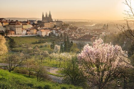 Scenic view of Prague tiled roofs during sunrise in spring. Towers of St Vitus and St. Nicholas church seen from Petrin hill viewpoint. Romantic golden sun glow in morning and blooming trees in a park
