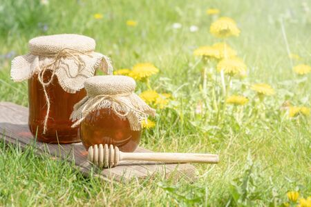 Homemade dandelion honey or syrup in rustic glass jars. Bowls of honey with wooden dipper in garden of dandelions. Concept of natural, countryside, organic and healthy product