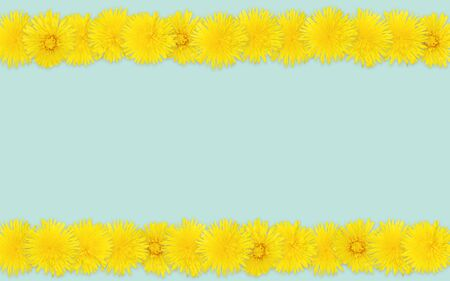 Yellow dandelions pattern on pale green background. Top view, realistic photo collage, rows of floral pattern, Spring colors, repeating blossoms neatly organized in rows. Border with space copy