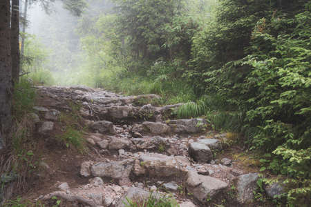 Dreamy and enchanted view of rocky steps in misty weather. Scenic wild nature in High Tatras, Slovakia. The way forward and overcoming obstacles concept