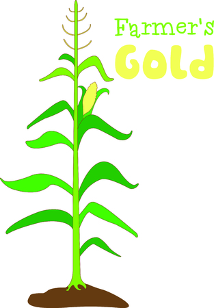 corn stalk: A very eye catching and regal stalk of corn.  Makes for a lovely fall decoration. Illustration