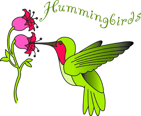 Hummingbirds are a thing of beauty.  Use our lovely hummingbird to add the beauty of nature to your projects.  It is sure to be a favorite in your design collection. Çizim