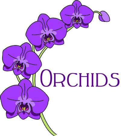 Orchids take our thoughts to tropical island places.  Use this lovely stem of orchids to add this tropical beauty to your bags, shirts and dcor.
