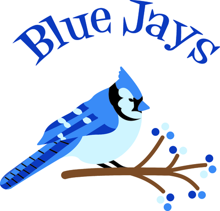 jay: Ever needed something cheerful to help you in the kitchen This blue jay is perfect for the kitchen!